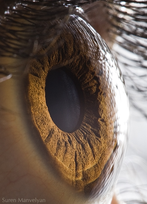 Microscopic Images Of Human Eye Reveals Its Complicated Structure[PICS] 1