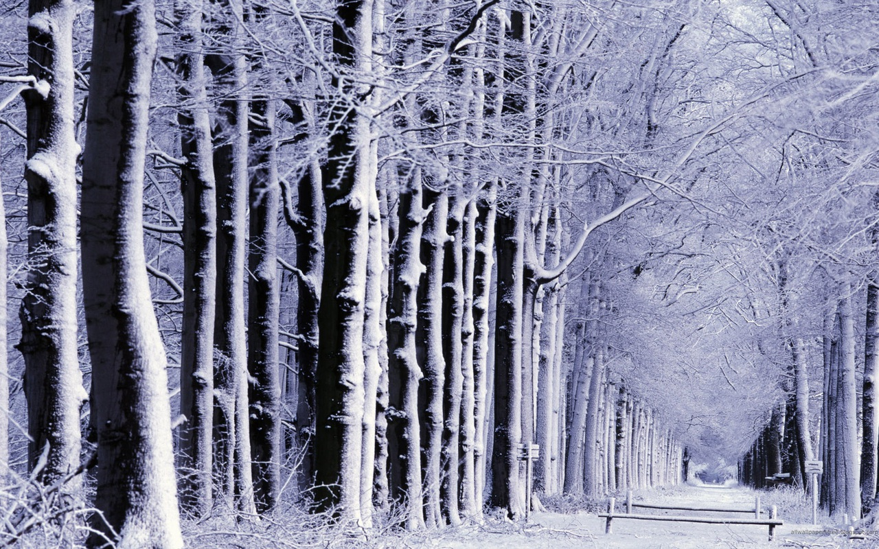 """Snow-Capped Trees"" Wallpaper Collection For Your Desktop"