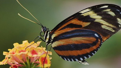"""Beautiful Butterflies"" Wallpaper Collection For Your Desktop"