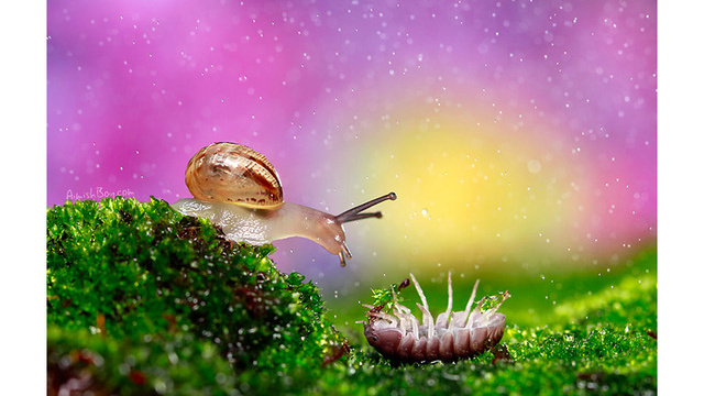 Disney-Inspired Magical Photos Of Insects