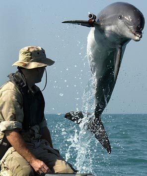 U.S. Military Is Using Dolphins To Detect Mines