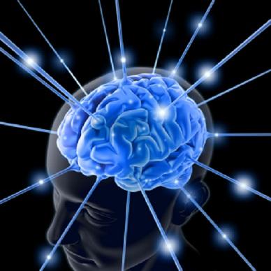 brain,human brain