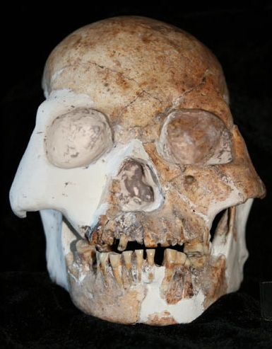 human skull,Red Cave People skull,new human species,new human specie,human specie,fossils human specie