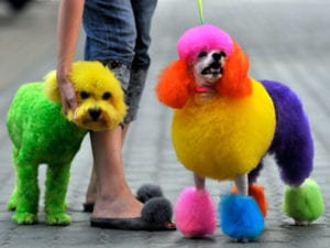 Competitive Dog Grooming