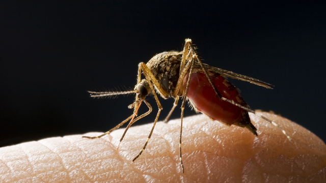 Scientists So Close To Malaria Cure