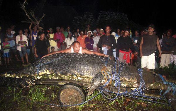 Giant Crocodile, Giant Crocodile found