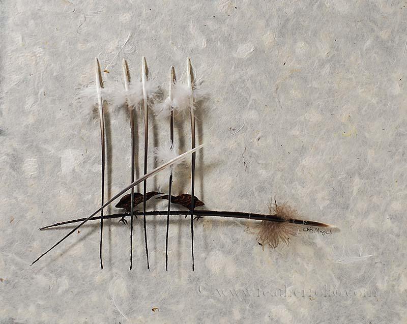 bird feathers, art, amazing art, art pictures, bids, feathers, bird feather artist, bird feather art, Chris Maynard, bird feathers art, amazing bird feather art