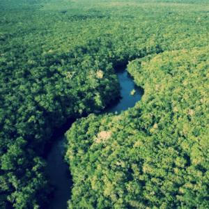 amazon, Amazon Rainforest