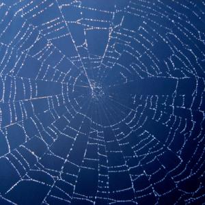 spiderweb, Spider Web