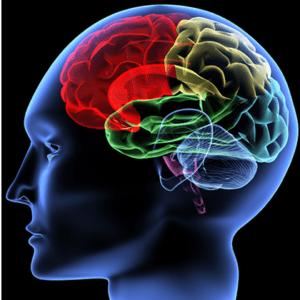 original purpose, brain, mind