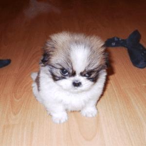 animal emotions, emotions of animals