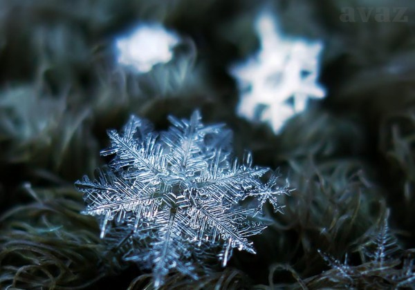 Snowflakes at their finest, Macro details of snowflakes, snowflakes, snowflakes up close, photos of snowflakes, photography, amazing snowflakes photography