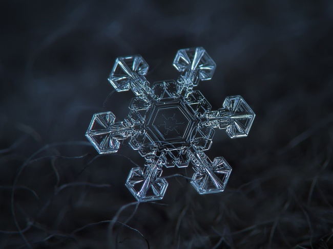 Snowflakes caught on tape, Macro details of snowflakes, snowflakes, snowflakes up close, photos of snowflakes, photography, amazing snowflakes photography