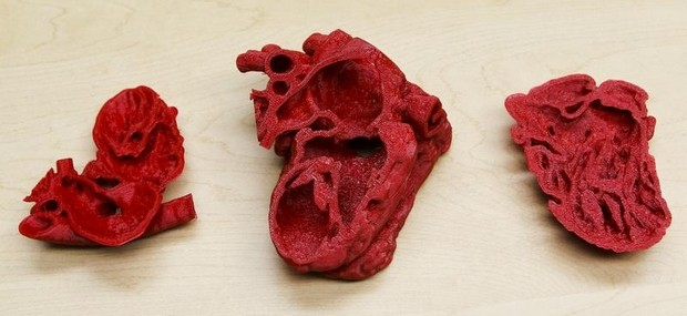 Cross section 3d printed heart,3D Printing Heart, 3D Printed Heart