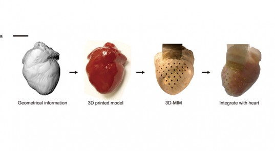 New Revolutionary Membrane Keeps Your Heart Beating Forever 1