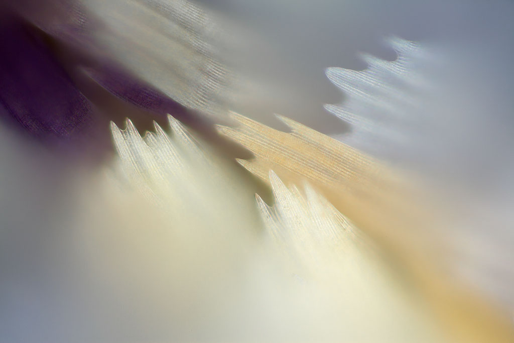 Hazy wings, Crystal wings, Yellow wings, Blue wings, Brown wings, White wings, Wings, Butterfly wings, Moth wings, butterfly wings, microscopic images of butterfly wings