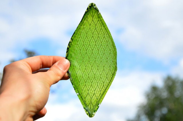 "Inventor Develops Synthetic ""Leaf"" That Produces Oxygen"