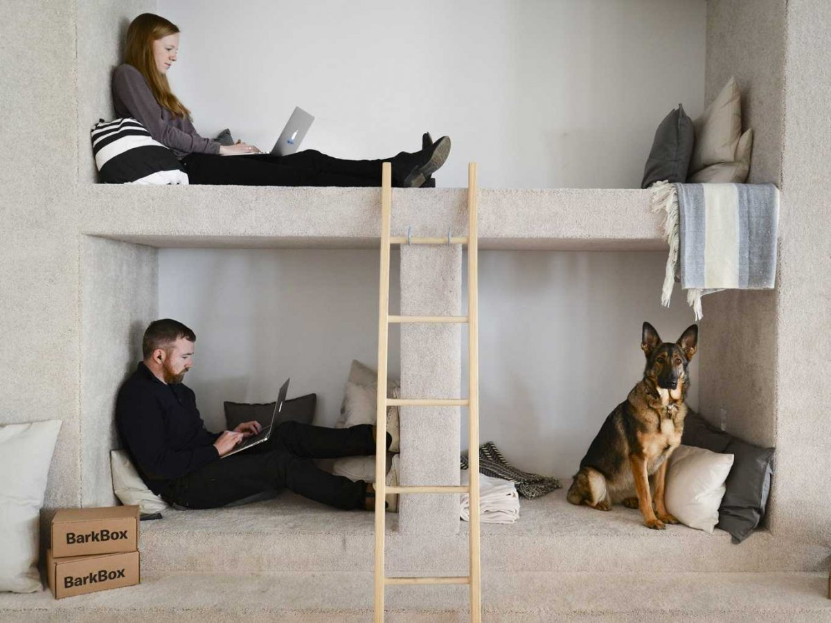 Barkbox offices look like hipster themed dog shelters