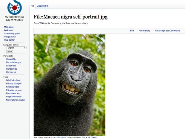 Wikipedia Refuses To Remove Selfie As 'Monkey Owns It' 1