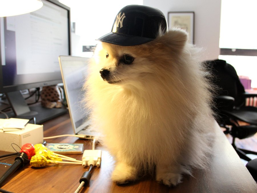 Tumblr has its own mascot called Tommy the Pomeranian