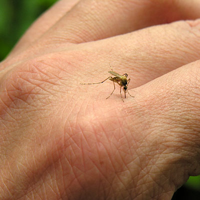 9 Things You Didn't Know About Mosquito Bites
