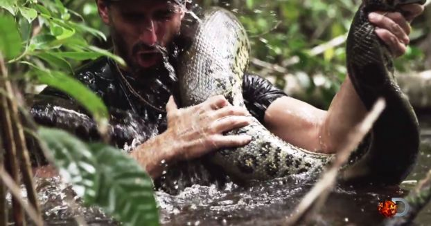 Man To Be 'Eaten Alive' by Anaconda on TV During Discovery Channel Special