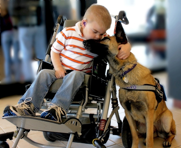 Lucas Hembree, Lucas Hembree dog, prayers for Lucas Hembree