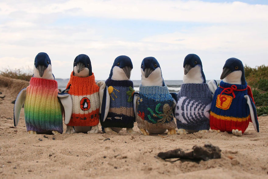 Clothed penguins, oldest man, Australia oldest man, clothed penguins, penguins, animals, clothed animals, penguin sweaters, Philip Island Penguin Foundation