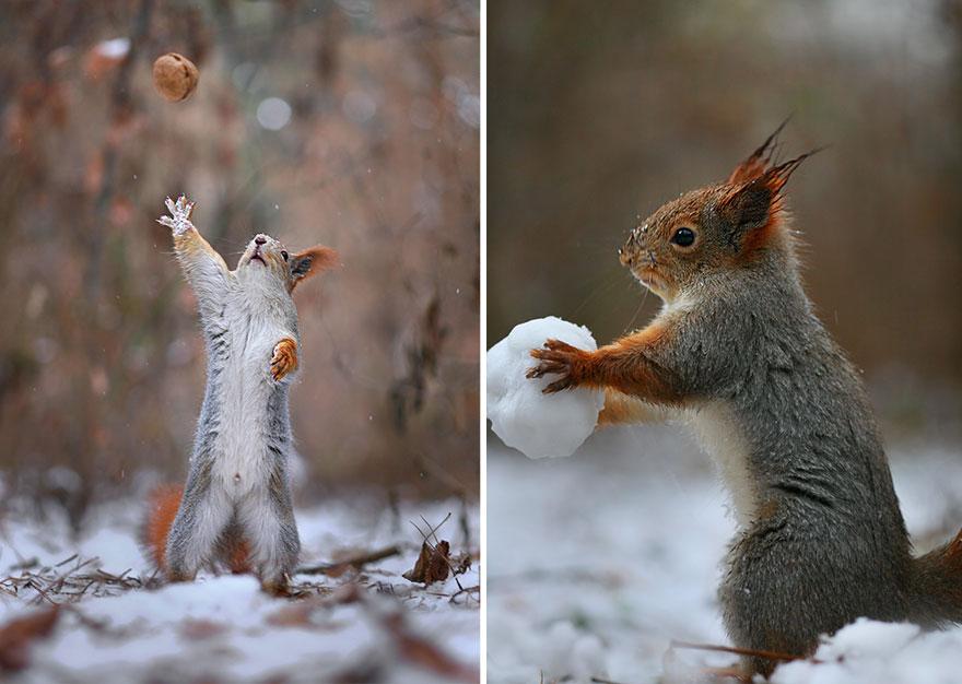 Catching squirrel, Vadim Trunov, squirrels photography, wildlife photography, cute squirrel photography, Vadim Trunov