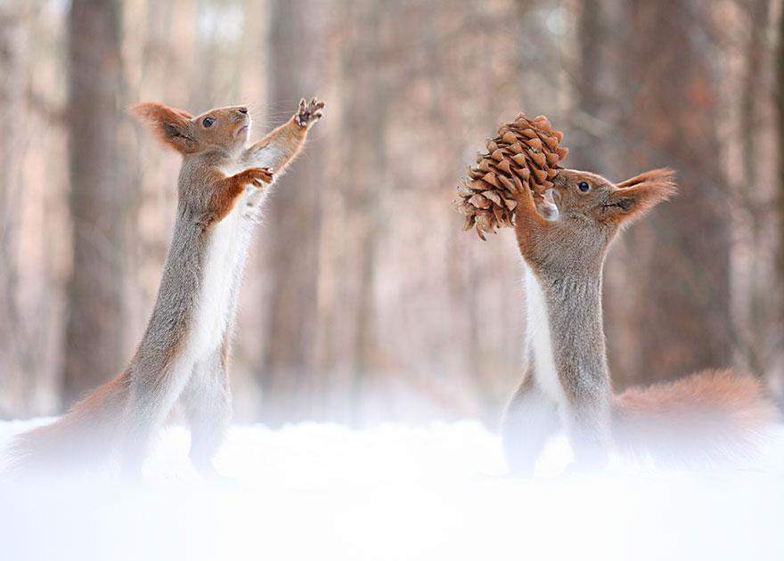 Pine cone squirrel, Vadim Trunov, squirrels photography, wildlife photography, cute squirrel photography, Vadim Trunov