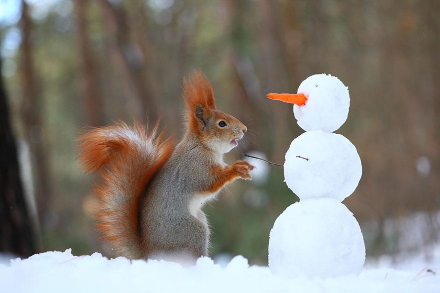Squirrel builds snowman, Vadim Trunov, squirrels photography, wildlife photography, cute squirrel photography, Vadim Trunov