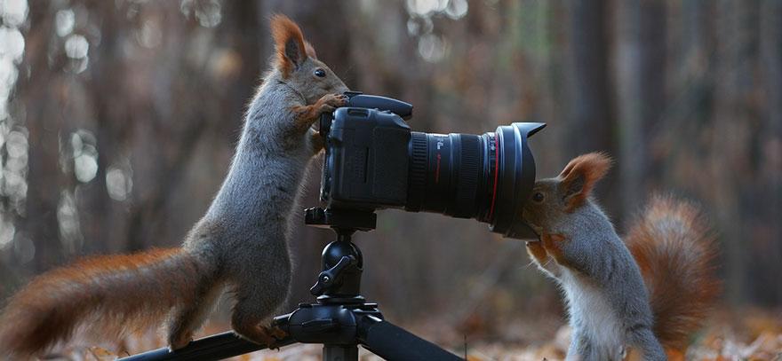 Squirrel photographer, Vadim Trunov, squirrels photography, wildlife photography, cute squirrel photography, Vadim Trunov