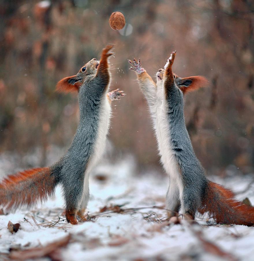 Squirrel quarrel, Vadim Trunov, squirrels photography, wildlife photography, cute squirrel photography, Vadim Trunov