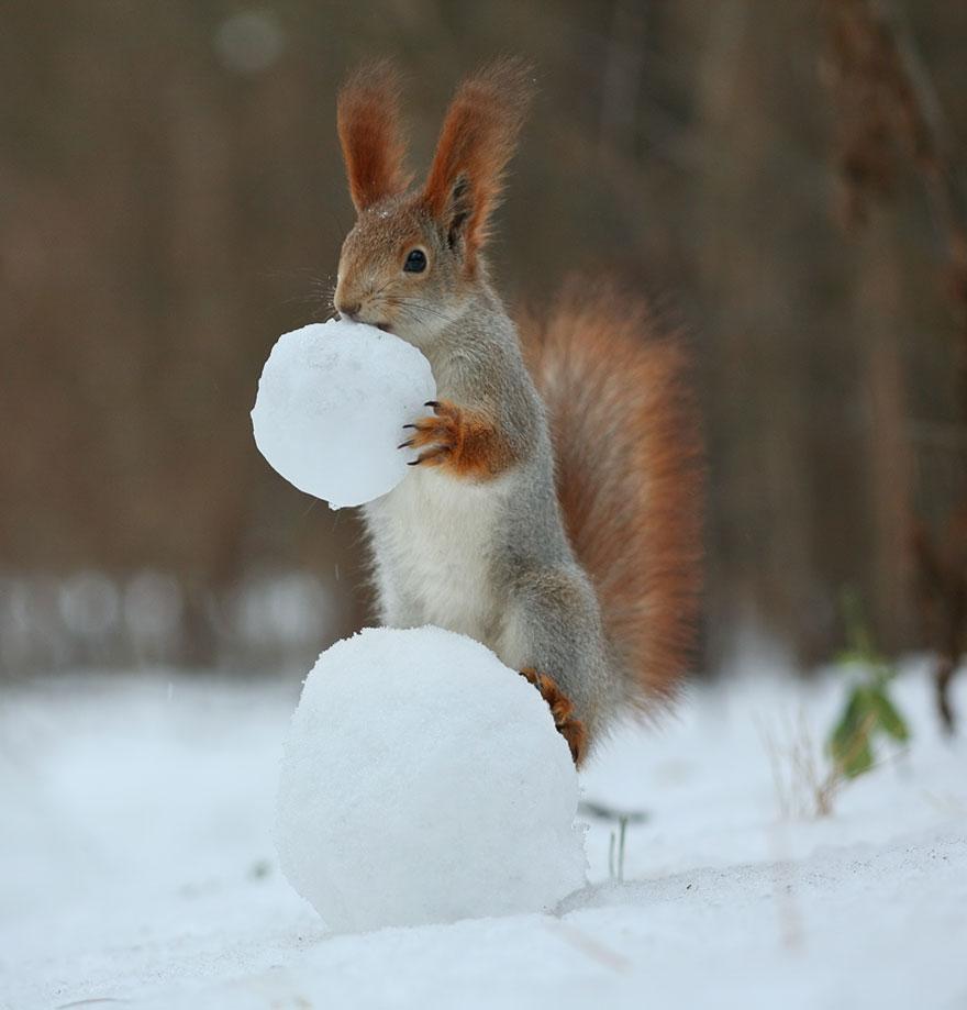 Squirrel snowman, Vadim Trunov, squirrels photography, wildlife photography, cute squirrel photography, Vadim Trunov