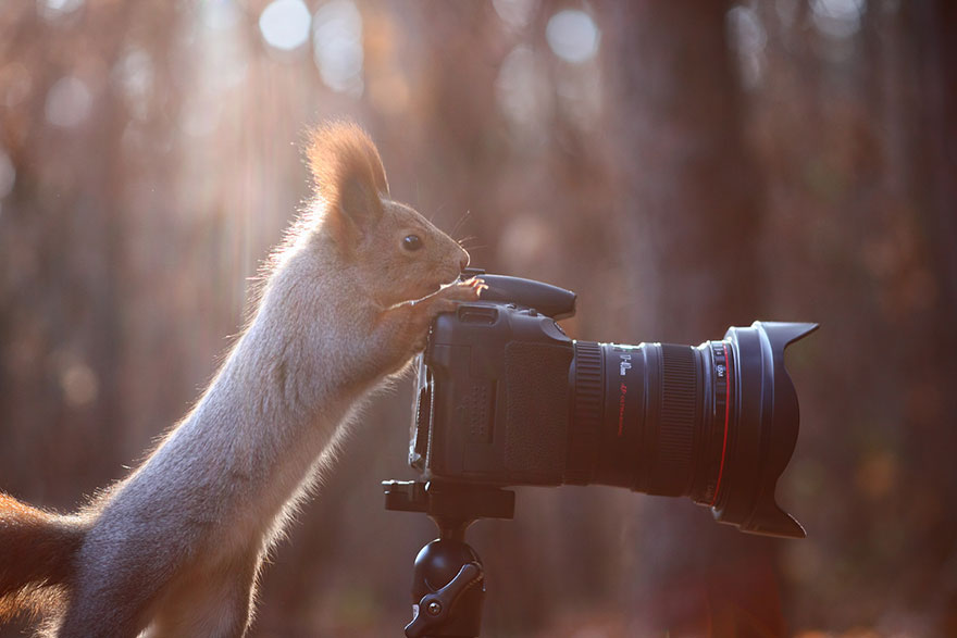 Photographer Captures The Cutest Squirrel Photo Shoot Ever 3