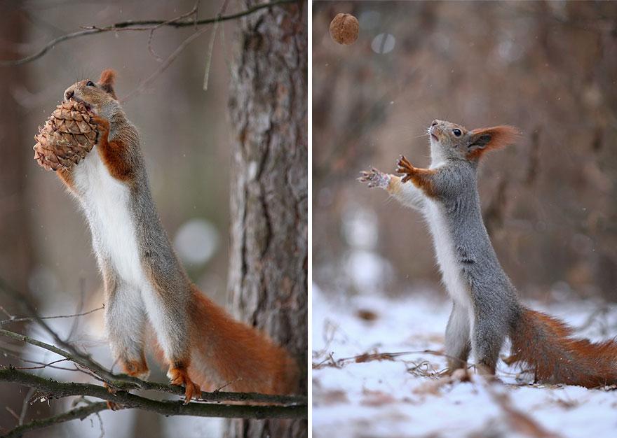 Squirrel with pine cone, Vadim Trunov, squirrels photography, wildlife photography, cute squirrel photography, Vadim Trunov