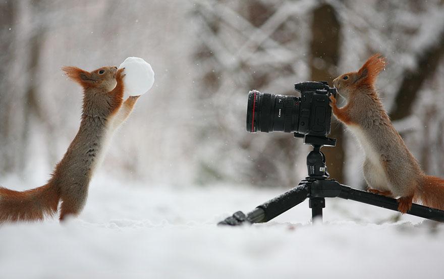 Squirrels practice photography, Vadim Trunov, squirrels photography, wildlife photography, cute squirrel photography, Vadim Trunov