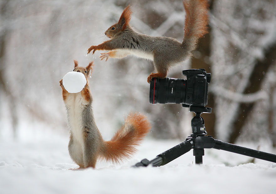 Photographer Captures The Cutest Squirrel Photo Shoot Ever 1