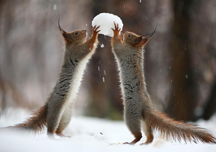 Two squirrels, Vadim Trunov, squirrels photography, wildlife photography, cute squirrel photography, Vadim Trunov