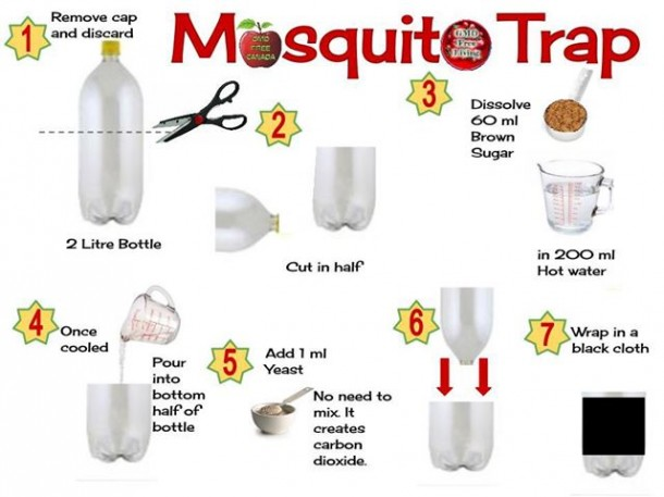 How To Get Rid Of Mosquitoes: A Homemade Mosquito Trap That Really Works 1