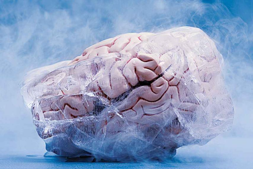 Rabbit Brain Returns Successfully from Cryopreservation