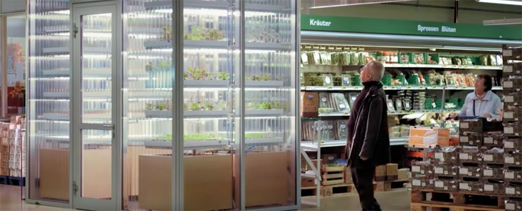 German supermarkets will soon have a mini farm at the end of the aisle