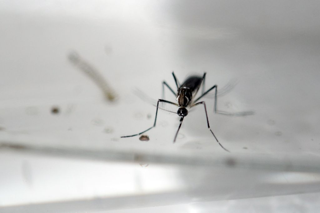 Zika virus spread by sex from woman to man
