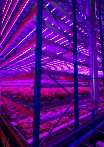 Vertical Farming Is The New Trend