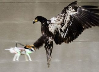 Eagles Destroy Corporate Drones