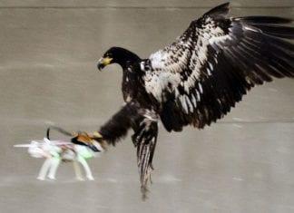 Eagles Destroy Corporate Drones