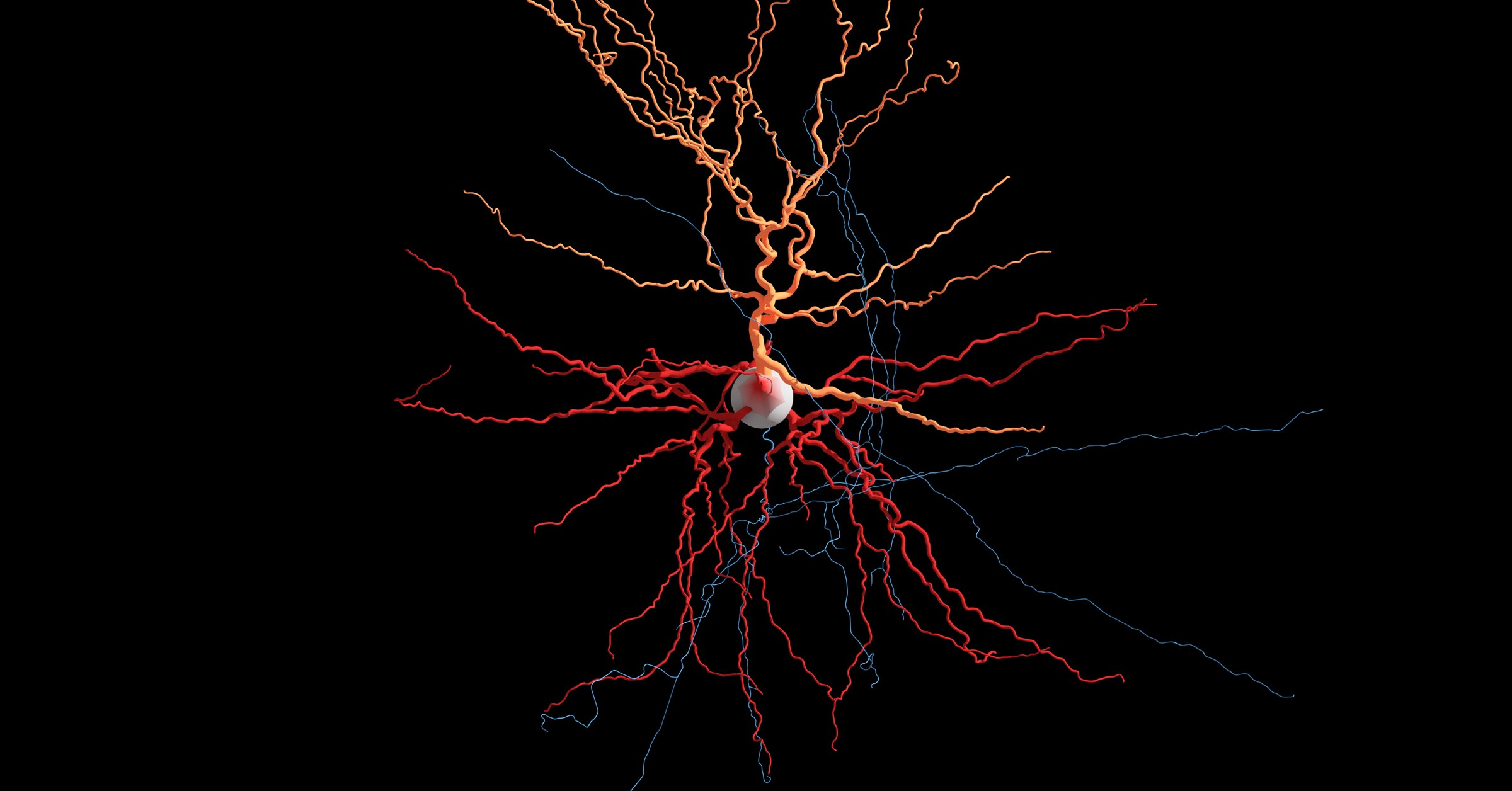 These Neurons are Alive and Firing. And You Can Watch Them In 3-D