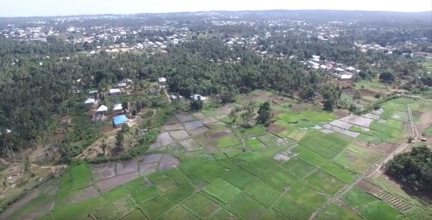 rice-paddy-zanzibar-drone-mosquito-malaria