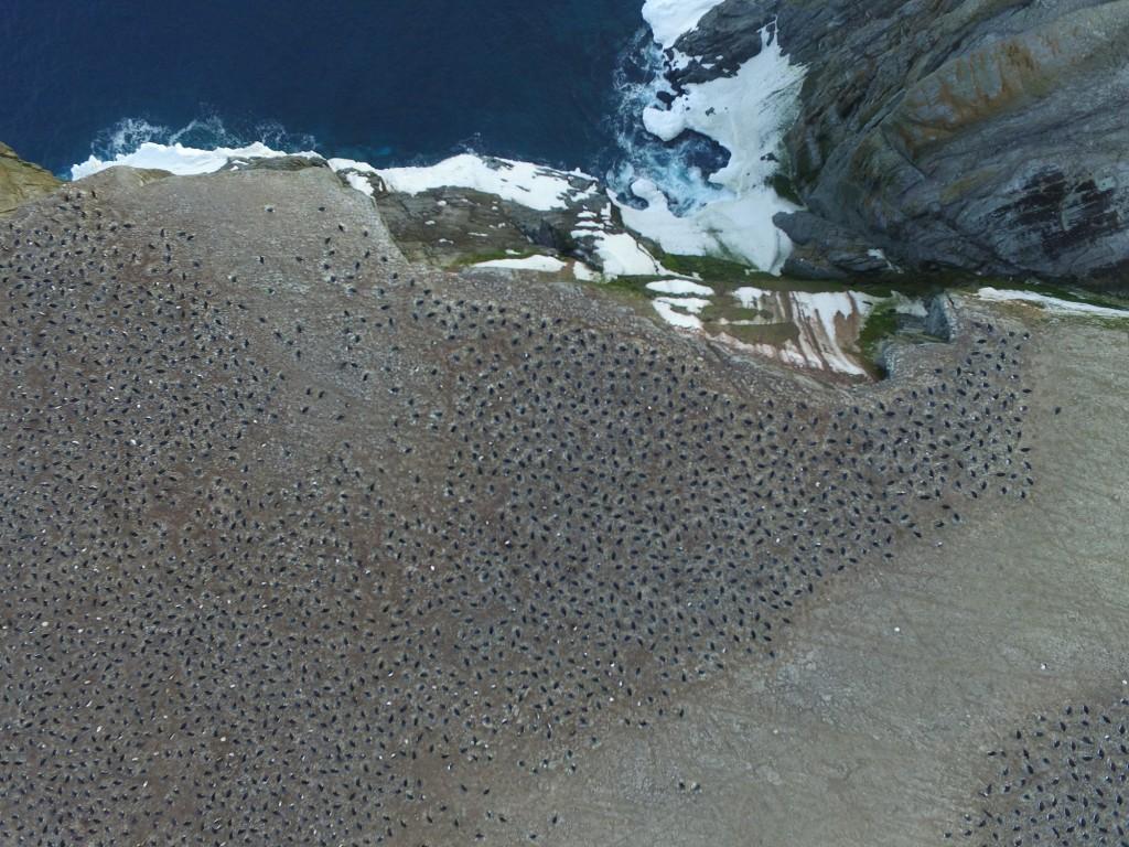 penguin-drone-antarctica-climate-change-mega-colony